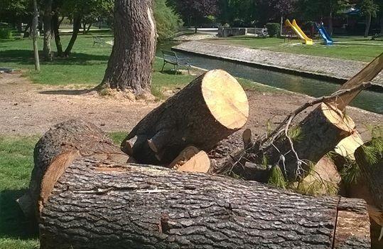 GRAĐANI OGORČENI Otpilano još jedno stablo, polako nestaje i park Vruljica