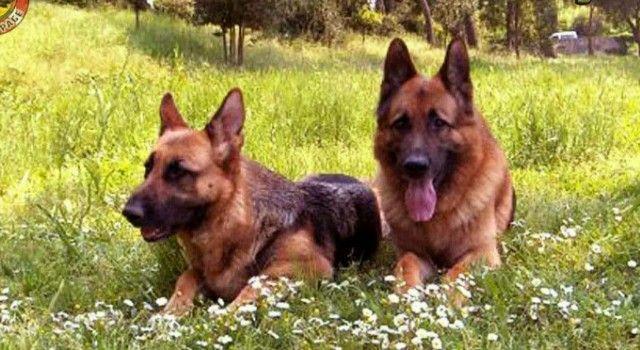 OPREZ – VLASNICI PASA Otrovan i treći pas u Bibinjama