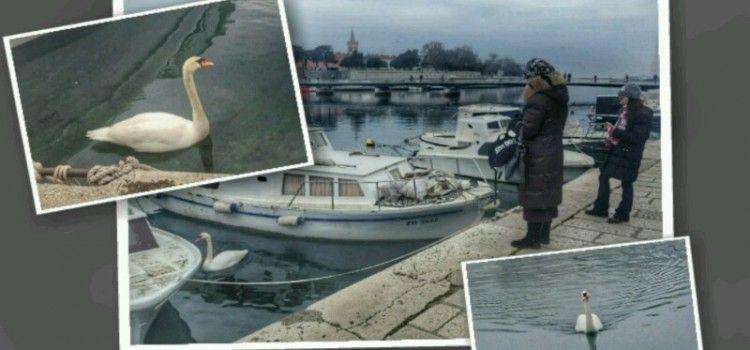 """LJEPOTAN Iz Foše se preselio u Jazine, pa """"žica"""" prolaznike kruh"""