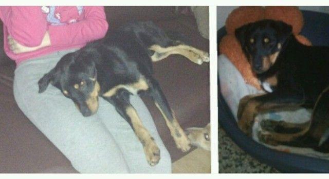 SPASITE GA Pružite dom napuštenom psu kojeg su djeca zlostavljala petardama