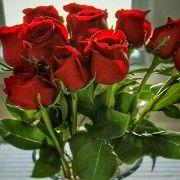 """ZADRANI """"OKUPIRALI"""" U CVJEĆARNICE Kupuju ruže za Valentinovo!"""