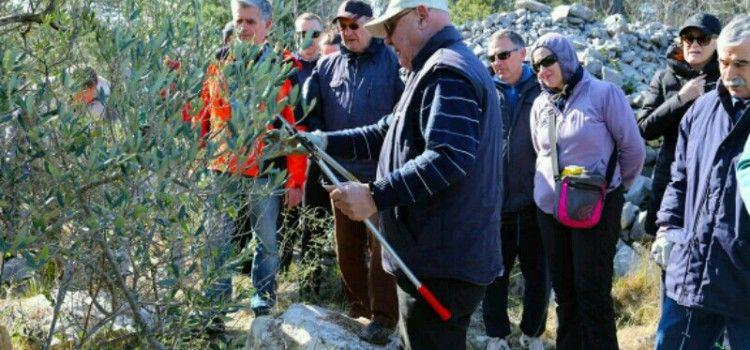 Radionica za maslinare održana na području Vranskog jezera