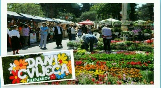Festival cvijeća u Sv. Filip i Jakovu od 26. do 28. travnja; Pjevat će i klapa Intrade