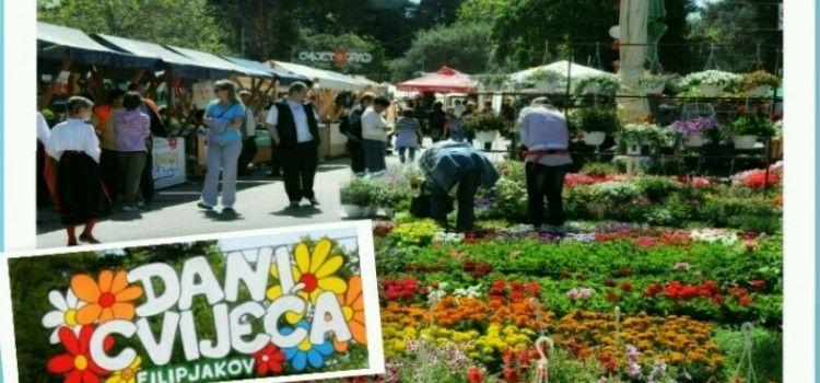 SAJAM CVIJEĆA U SV. FILIPU I JAKOVU Očekuje se 30.000 posjetitelja!