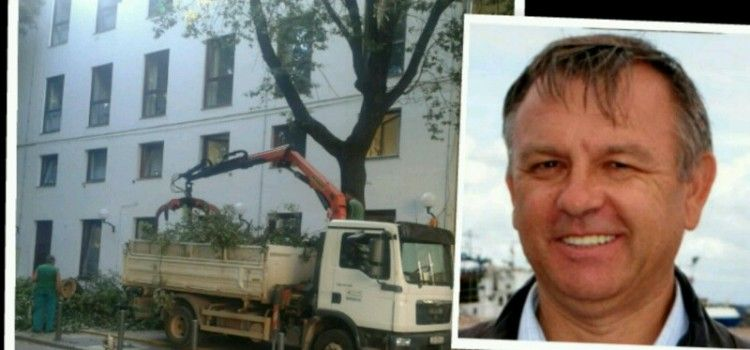 RAZBJESNIO ZADRANE Direktor Lenko Ugrinić će odgovarati za sječu stoljetnih stabala na Poluotoku