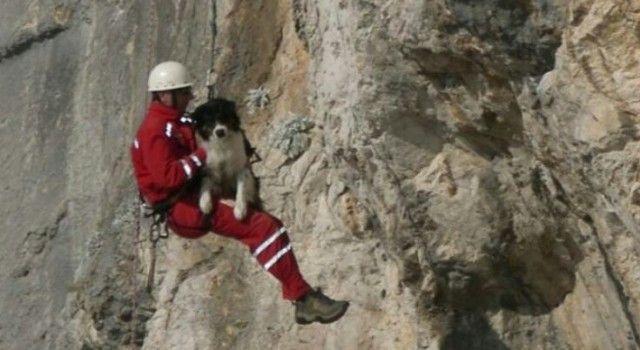 TUŽNA VIJEST Uginuo ovčar Mel koji je pomagao u stotinama akcija spašavanja!