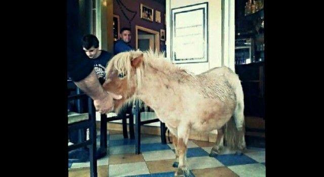 NA KAVI U zadarskom kafiću goste iznenadio konj