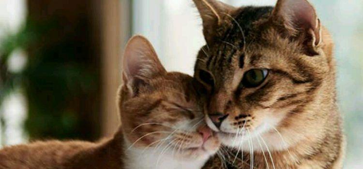 UŽAS Otrovane mačke oko biogradske tržnice i kolodvora!