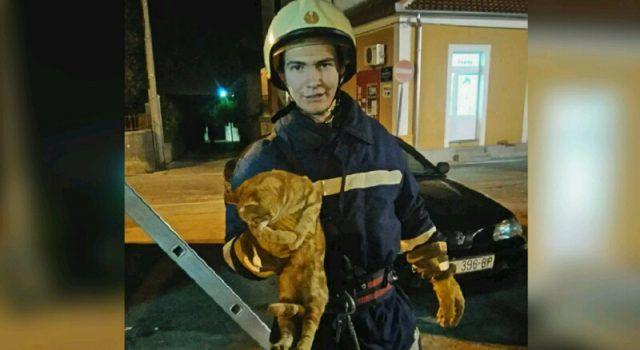 NA POZIV GRAĐANA Vatrogasci spasili mačku sa stabla u Arbanasima