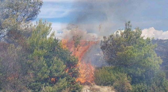U požaru izgorjele masline; Prijavljena 73-godišnja žena