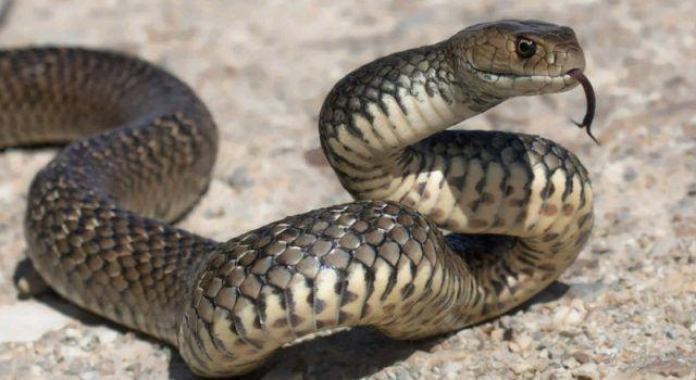 Djevojku ugrizla zmija u park šumi Musapstan, završila u bolnici