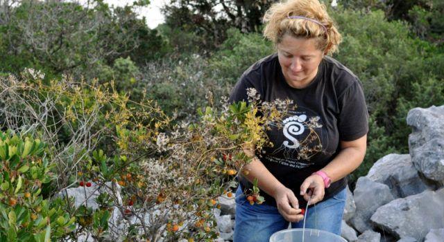 Rosalinda Banić sa 6 diploma živi od poljoprivrede i ribarstva na Pašmanu!