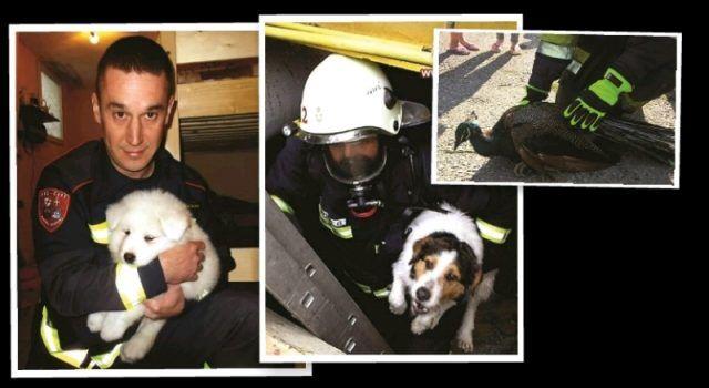 Vatrogasci spašavali pse, mačke, pauna, hvatali zmije, majmuna, golubove…