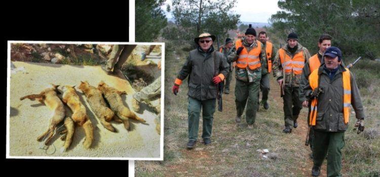 GALERIJA Lovci organizirali veliku hajku na divlje životinje