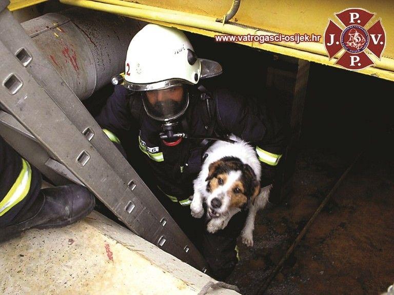 osjecki vatrogasci spasili psa iz 8 metara dubokog bazena-768x575