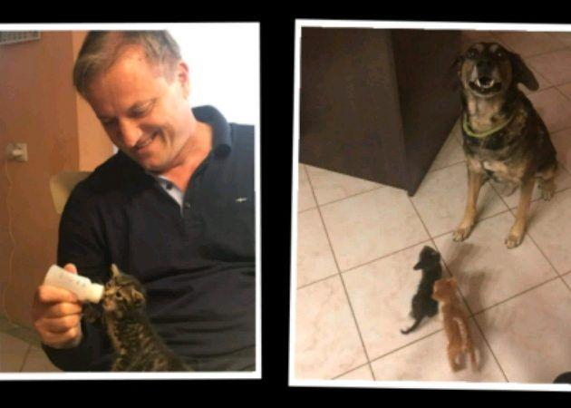 PLEMENIT ČIN Gradonačelnik Dukić pored psa udomio i dva mačića