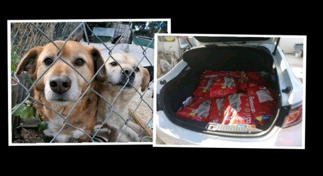 LIJEPA GESTA Sex shop iz Zadra donirao 340 kg hrane psićima u azilu