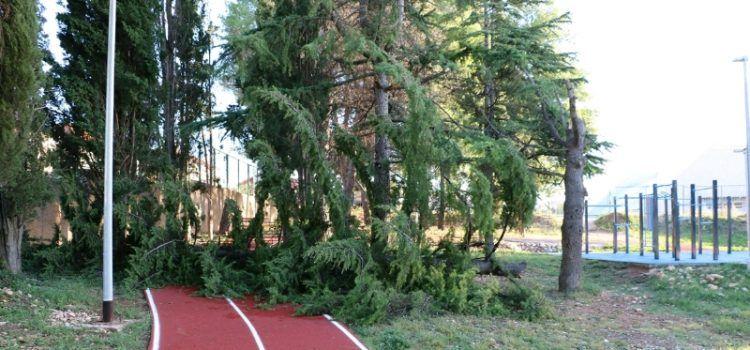 GALERIJA Olujno jugo srušilo bor na trim stazu na Višnjiku