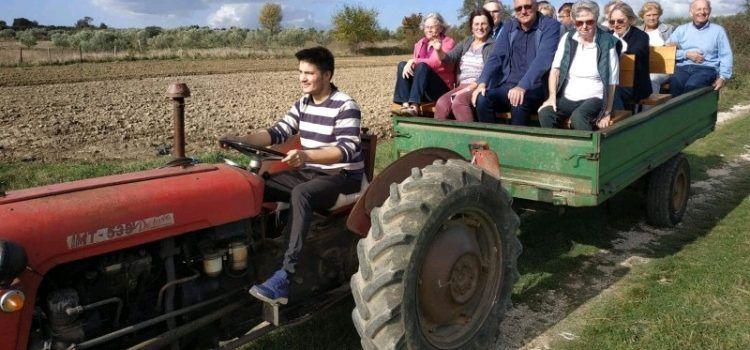 Turisti plaćaju 100 eura da bi brali masline u Briševu i vozili se u traktoru!