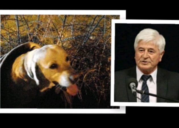 Načelnik Bibinja po kiši i mraku spašavao psa zgaženog na magistrali