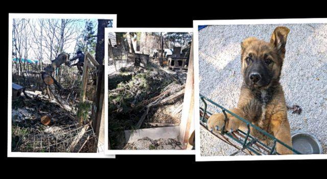 Bura porušila stabla i kućice za pse, iz Azila mole dobre ljude da dođu pomoći