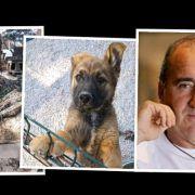 """Mladen Grdović poziva: """"Pomozimo svi psićima u azilu kojeg je porušila bura!"""""""