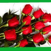 PODJELA RUŽA Proslava Valentinova na Narodnom trgu u Zadru