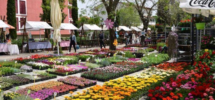 U Sv. Filip i Jakovu otvoren Festival cvijeća