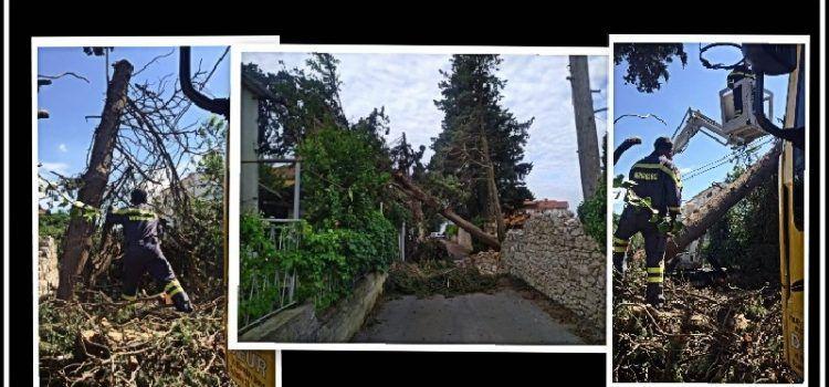 Vatrogasci uklanjaju stabla porušena u oluji prošlog tjedna
