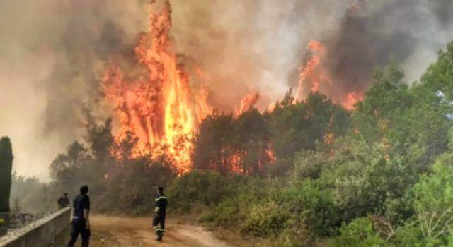 Policijski očevid potvrdio – Požar u Smokoviću namjerno je izazvan