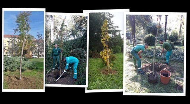 NASADI U AKCIJI Djelatnici za tri dana posadili 60 mladih stabala!