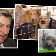 Longinu je projekt azila preskup; Neka se napušteni psi muče do daljnjega
