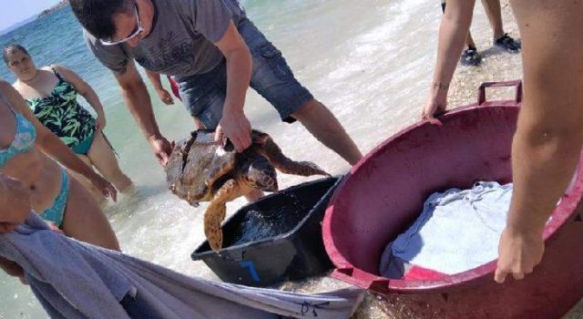 Dr. Marino Mirčeta spasio u Viru ranjenu morsku kornjaču koju je ozlijedio propeler