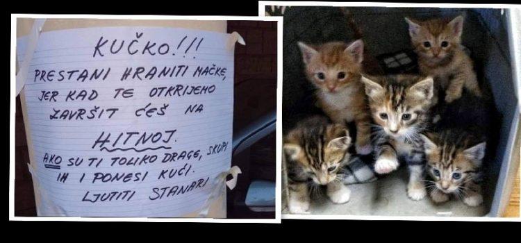 ŽALOSNO Stanari prijete ženi da će završiti na Hitnoj jer hrani gladne mačiće