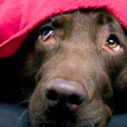 Zabranjena uporaba petardi – Prijatelji životinja oduševljeni odlukom Sabora RH!
