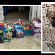 LIJEPA GESTA Učenici OŠ Bartula Kašića uštedjeli novac za hranu psima iz azila