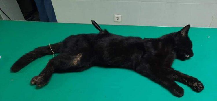 Uhićeni zlostavljači životinja: Ubijali mačke i pijetlove u Sukošanu i Poličniku