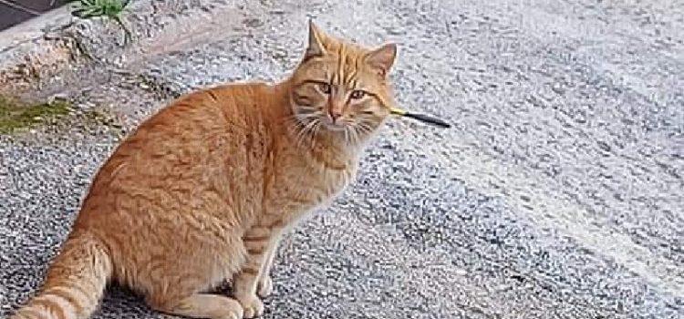 Spašen mačak iz Sukošana; Policija traži – tko je ubojica mačaka sa samostrelom?!