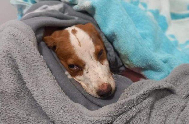 LOŠA VIJEST IZ AZILA Uginulo štene koje je vlasnik pretukao do smrti