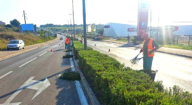Obavijest o radovima na održavanju zelenila na državnoj cesti D8