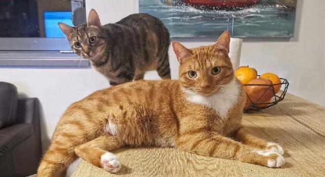 HVALEVRIJEDNE AKTIVNOSTI Na Ugljanu besplatno sterilizirano oko 600 mačaka