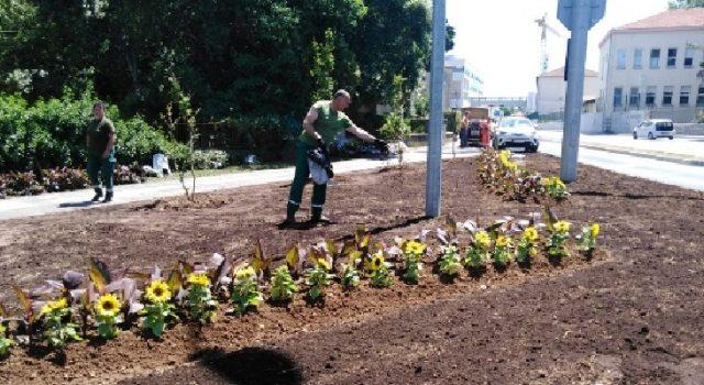 Djelatnici Nasada posadili cvijeće i uredili površine oko prometnice kod bolnice