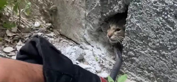 Vatrogasci spasili macu koju je netko zabetonirao u zgradi na Poluotoku