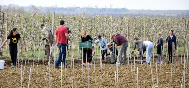 Diplomski studij Mediteranska poljoprivreda od jeseni na Sveučilištu u Zadru