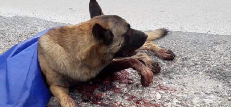 Policija pronašla čovjeka koji je teško ozlijedio psa, podnijeta kaznena prijava