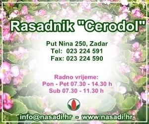 Nasadi